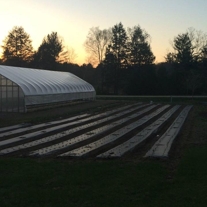 Pelosi Family Farm