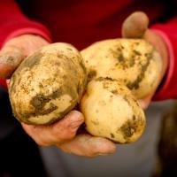 Chapelle's Vermont Potato Farm