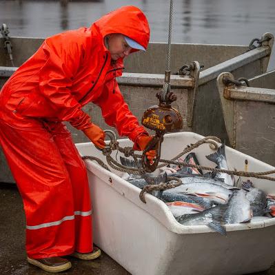 C&G's Wild Alaska Salmon