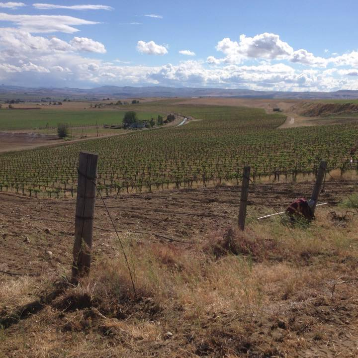 Snake River Winery