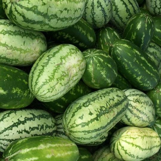 Clemson University Student Organic Farm