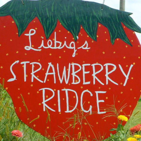 Strawberry Ridge