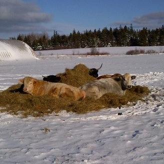 The Last Straw Farm