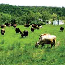 Hawthorne Valley Farm