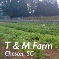 T & M Farm