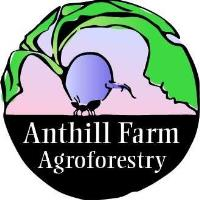 Anthill Farm