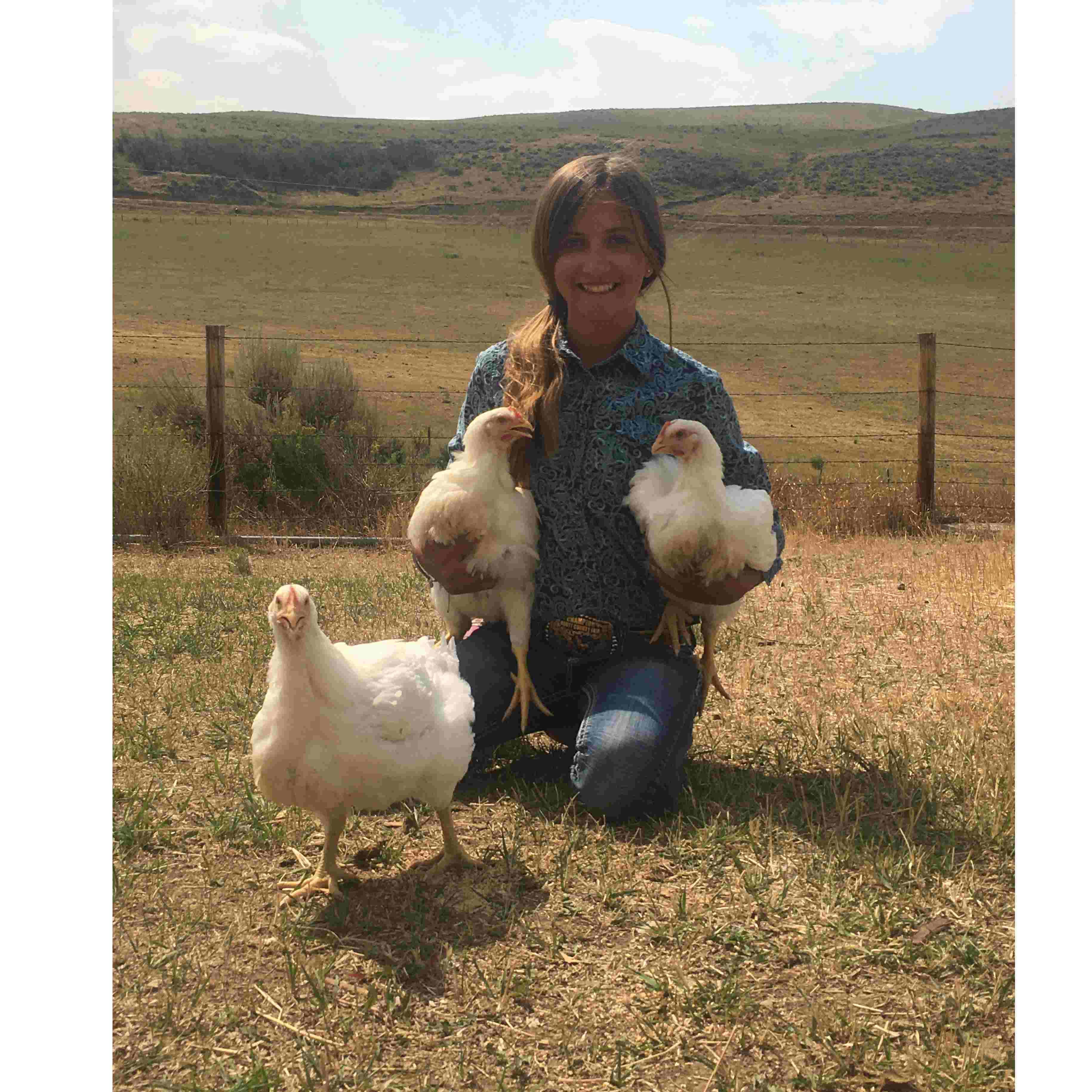 Kiley Iacovetto Chickens