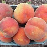 Hal Stover Orchard