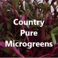 Country Pure Microgreens