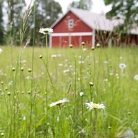 Skokomish Valley Farms
