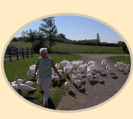 Cirrus Hill Farm
