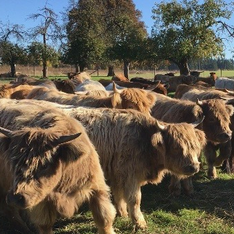 Martson Farm Highland Cattle