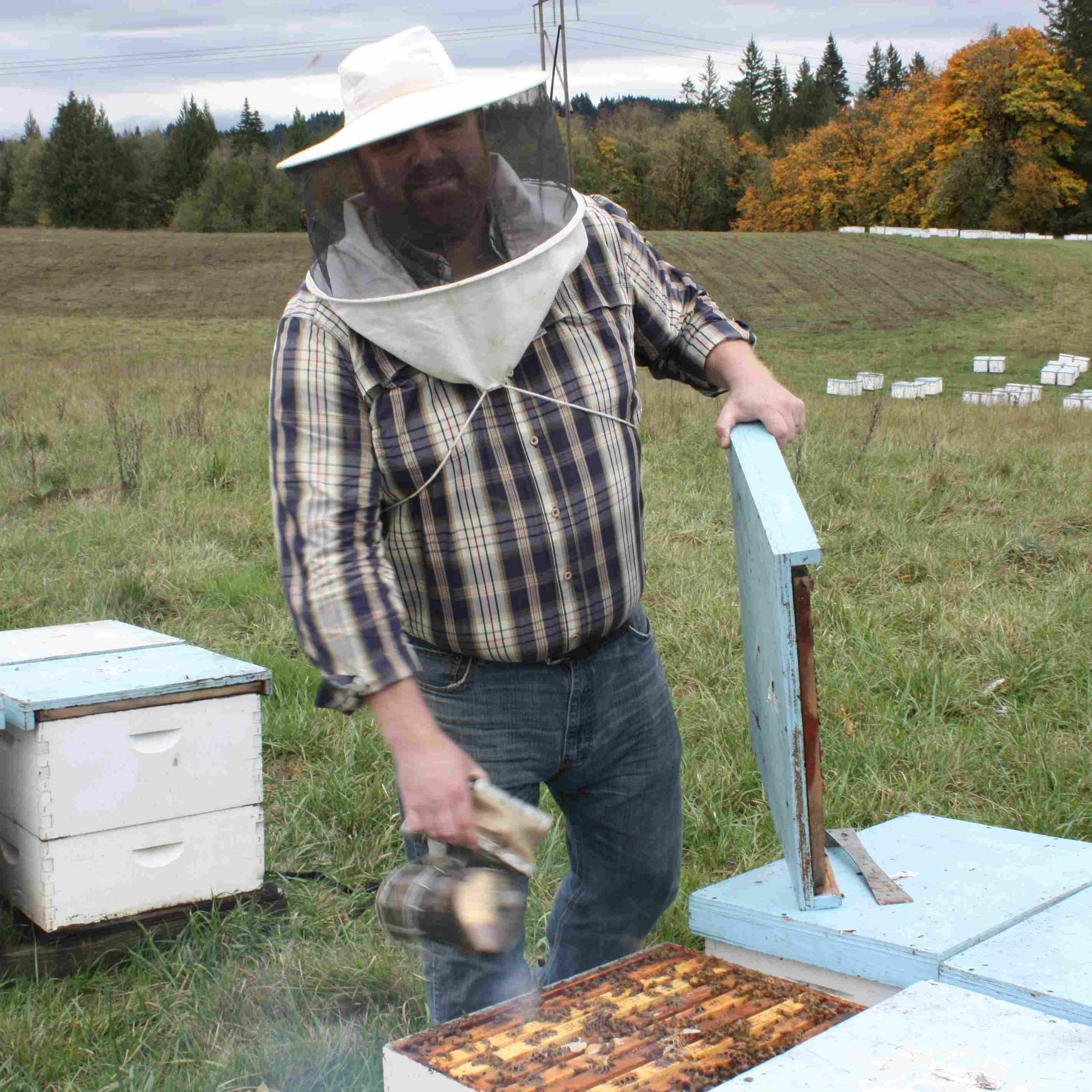 Foothills Honey Company