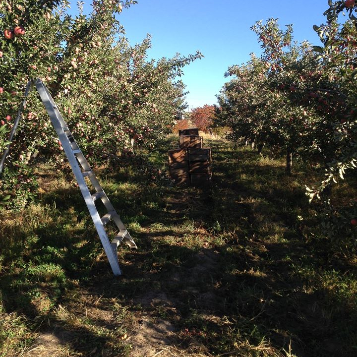 Kerby Orchard