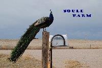 Soule Farm