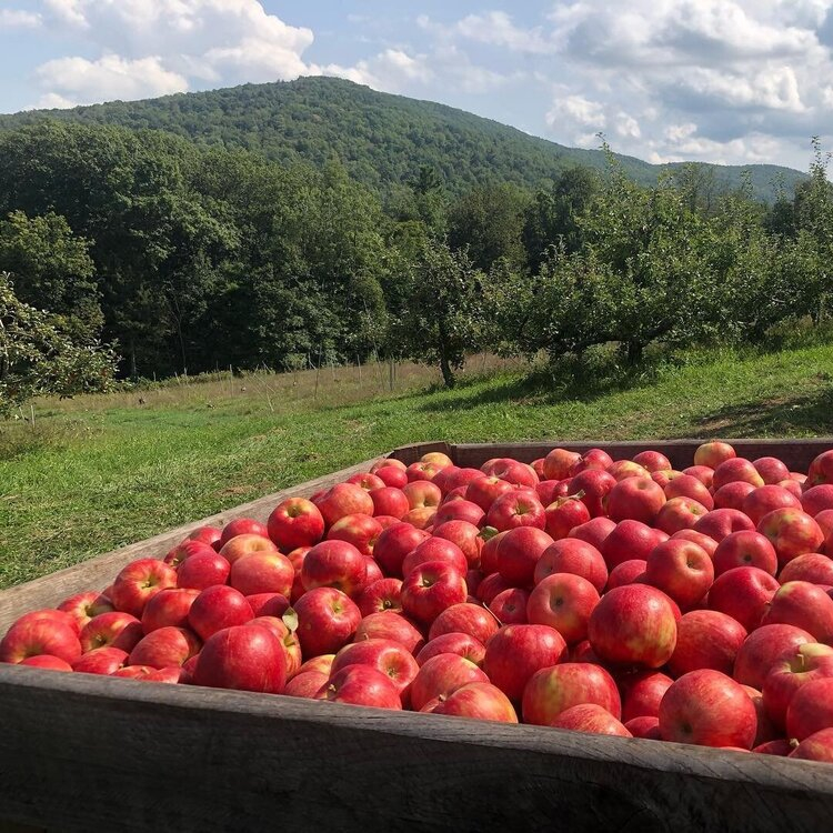 Clark Brothers Orchard