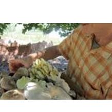 New Carpati Farms