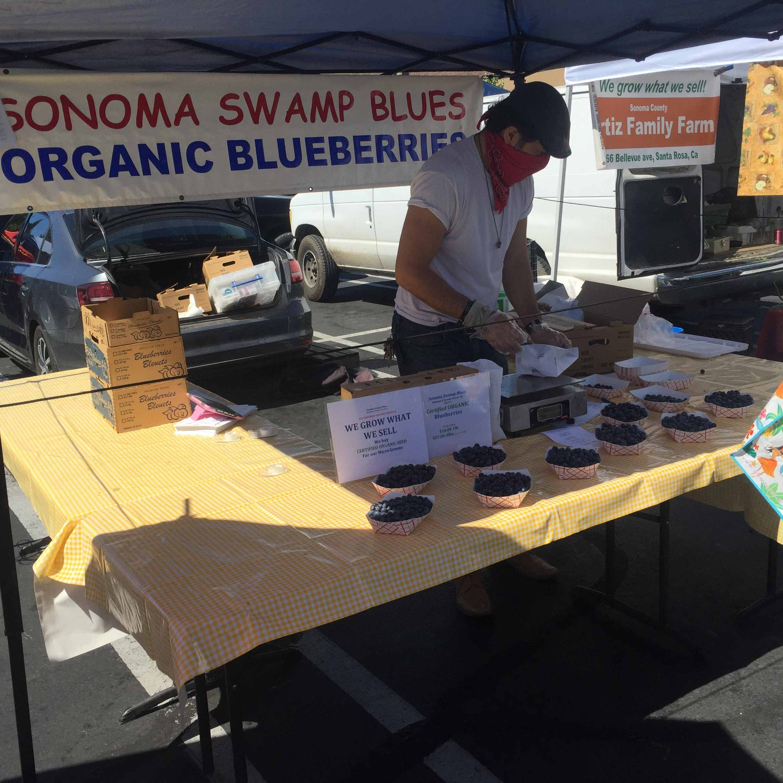 Sonoma Swamp Blues