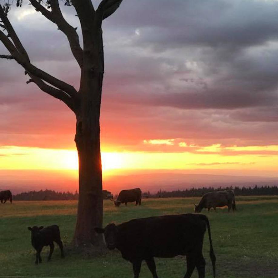 Bronco Farms