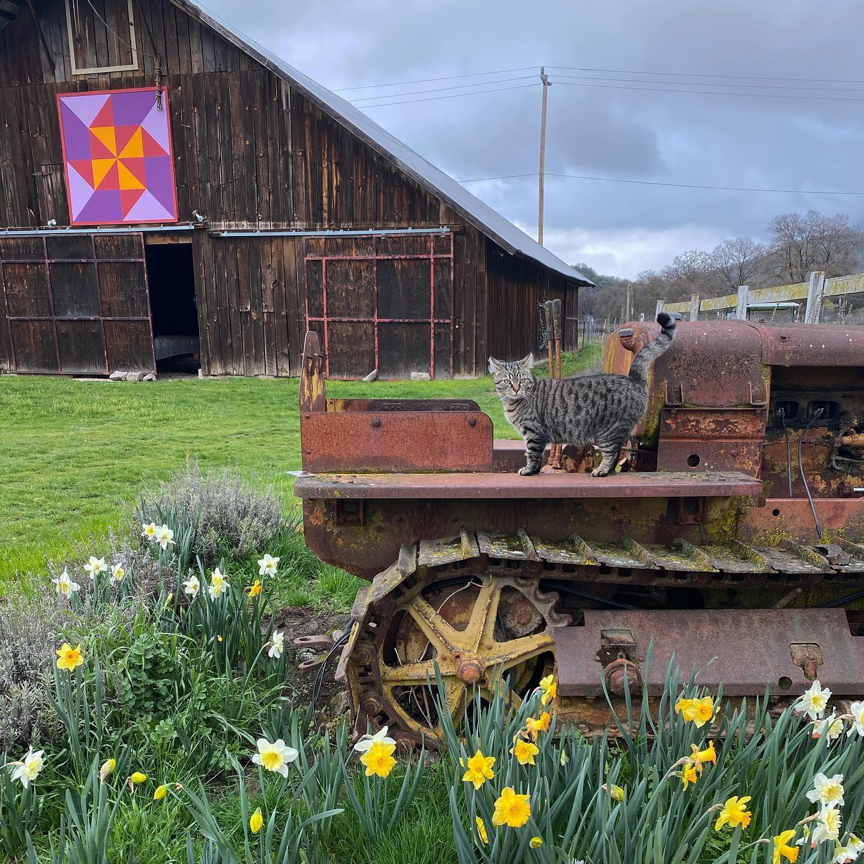 Peace and Plenty Farm