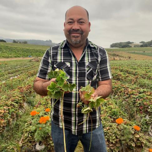 JSM Organics via Capay Valley Farm Shop