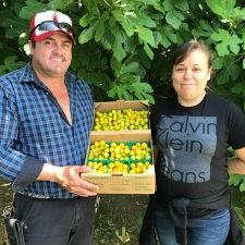 Terra Firma Farm via Capay Valley Farm Shop