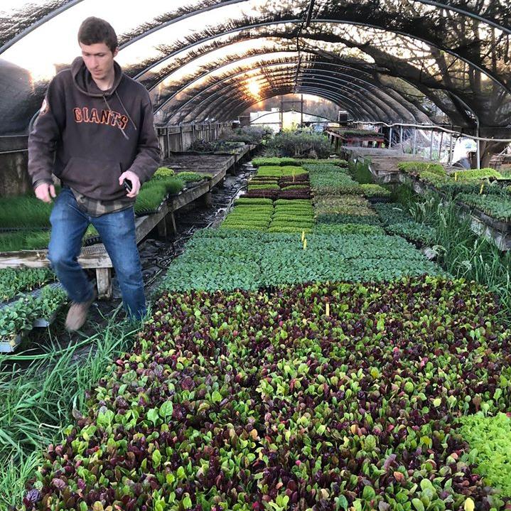 Eatwell Farm via Capay Valley Farm Shop
