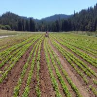 Big Mesa Farm
