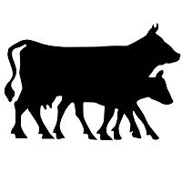 Lewis Waite Farm Lamb