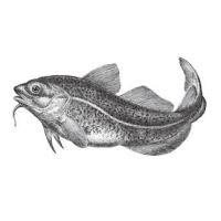 North Atlantic Wild Catch