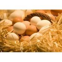 Local Egg Producers