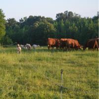 McSwain Ranch