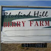 Bluebird Hill Berry Farm