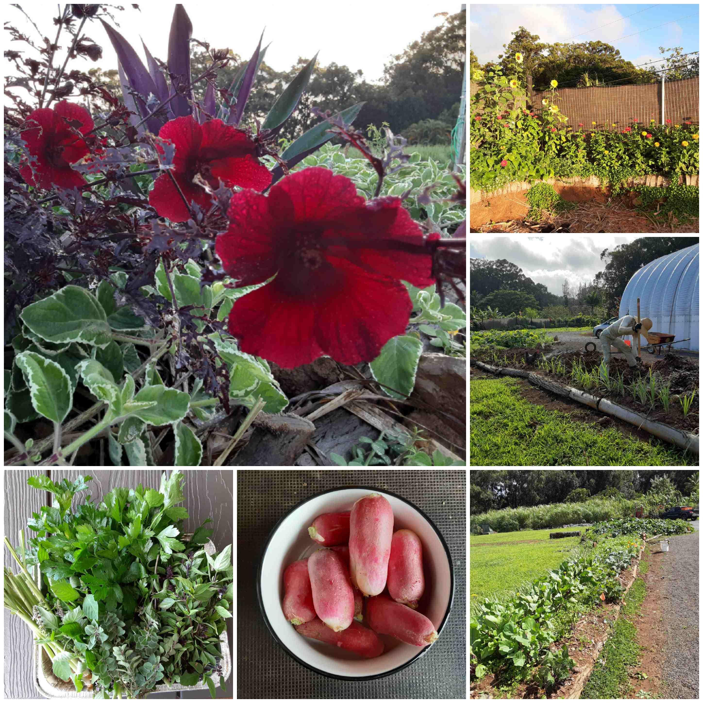 13 Moons Farm