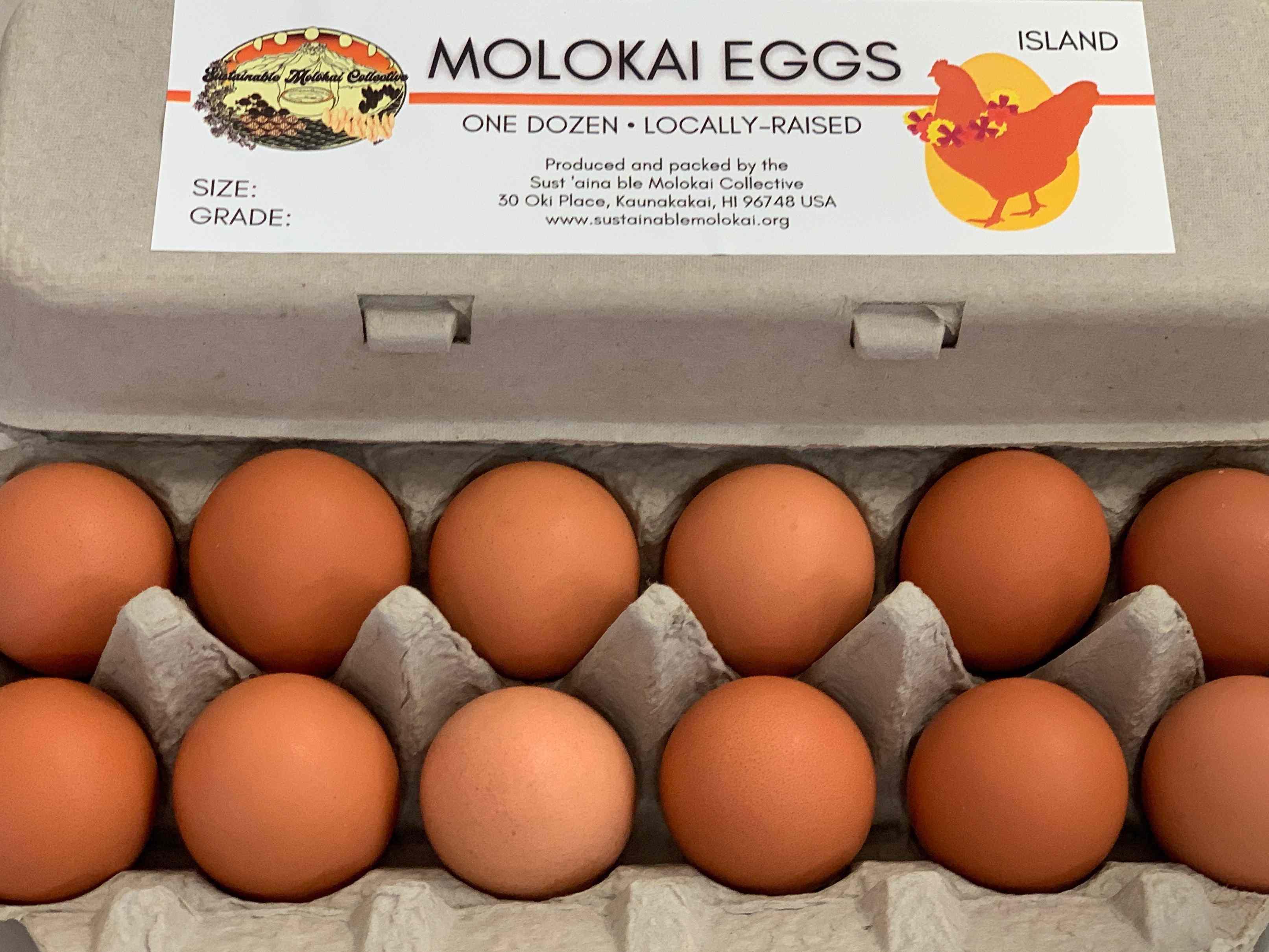SM Egg Collective