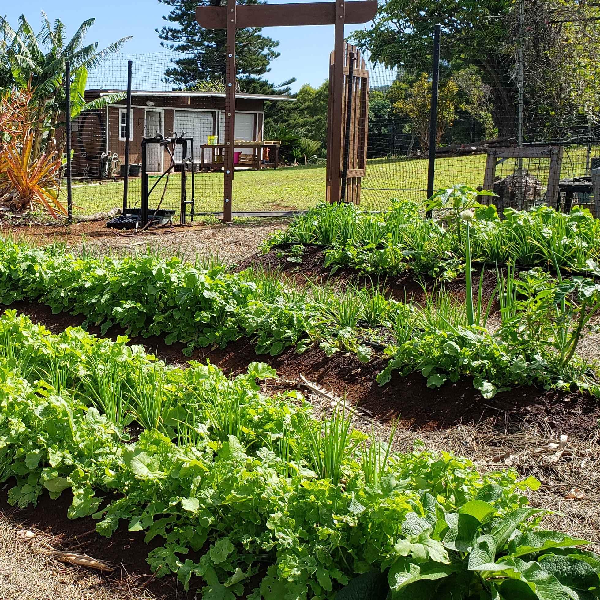 John's Farm, Kalae