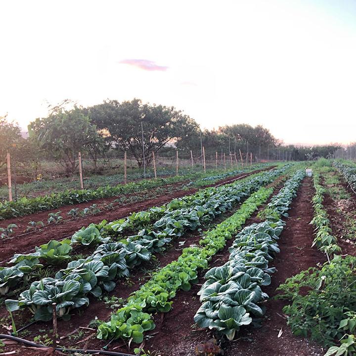 Kapuni's Farm