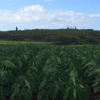 Puakala Farms