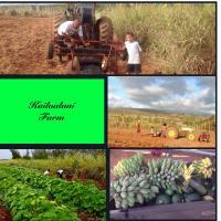 Kailoalani Farm
