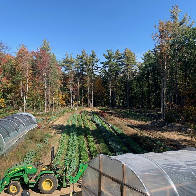 WhiteMarz Farm