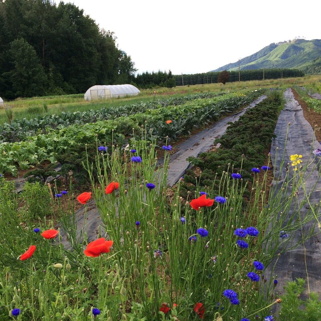 Gales Meadow Farm