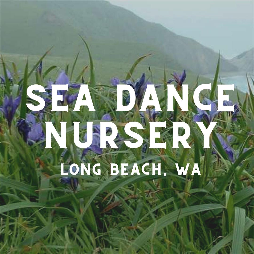 Sea Dance Nursery