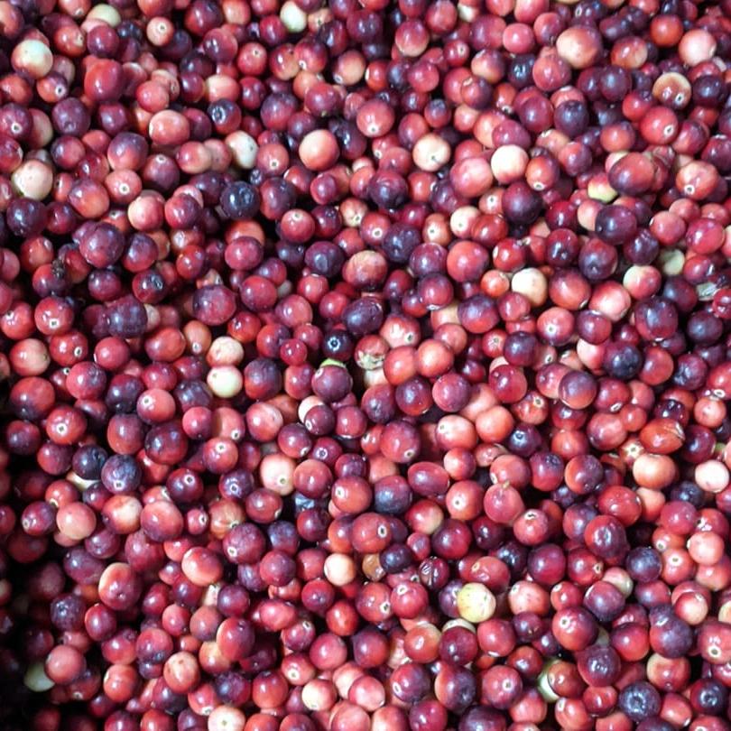 Cruel Mistress Cranberries