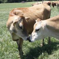 Pequea Valley Farm