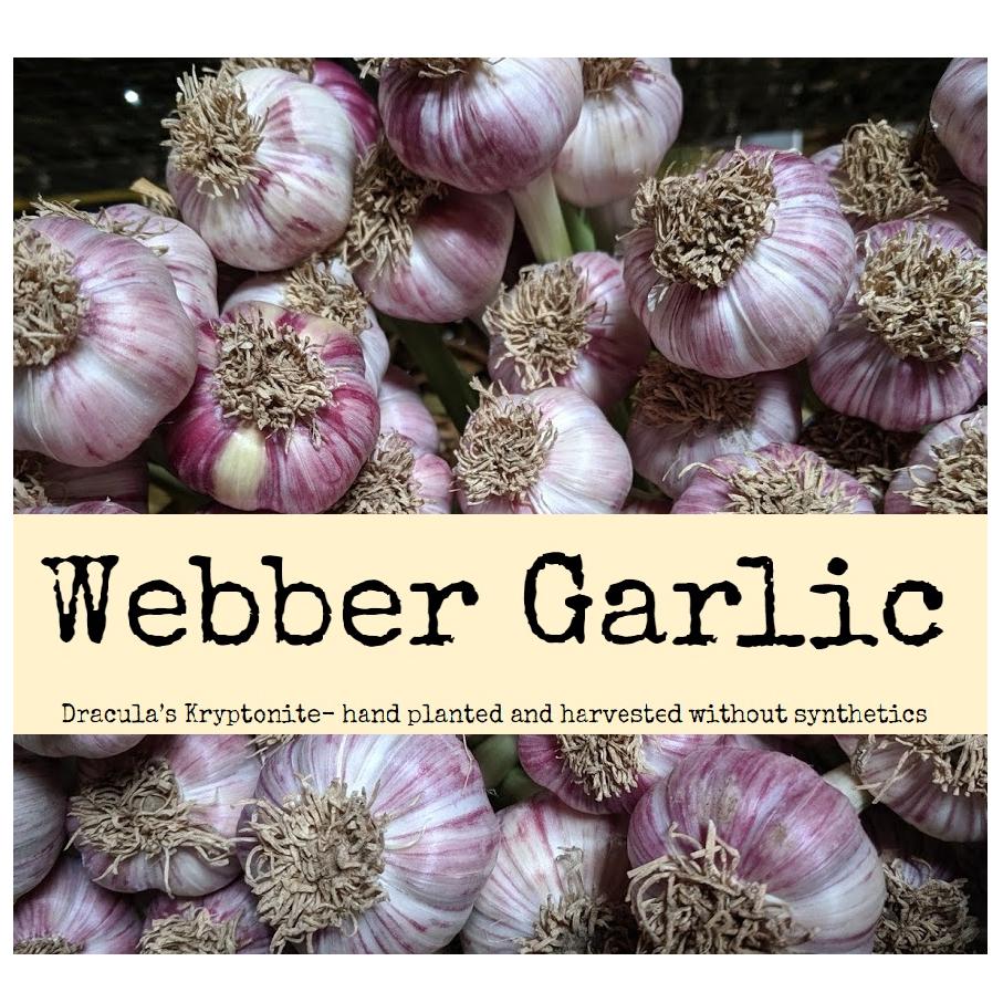 Webber Garlic
