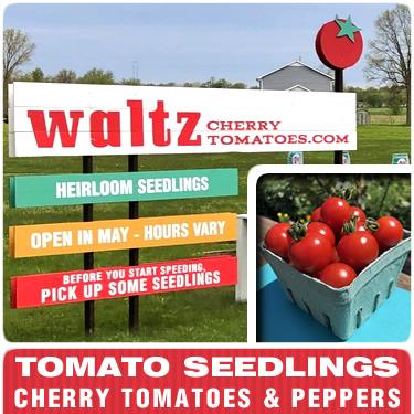 Waltz Cherry Tomatoes