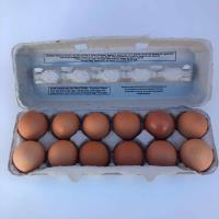Becks Best Eggs