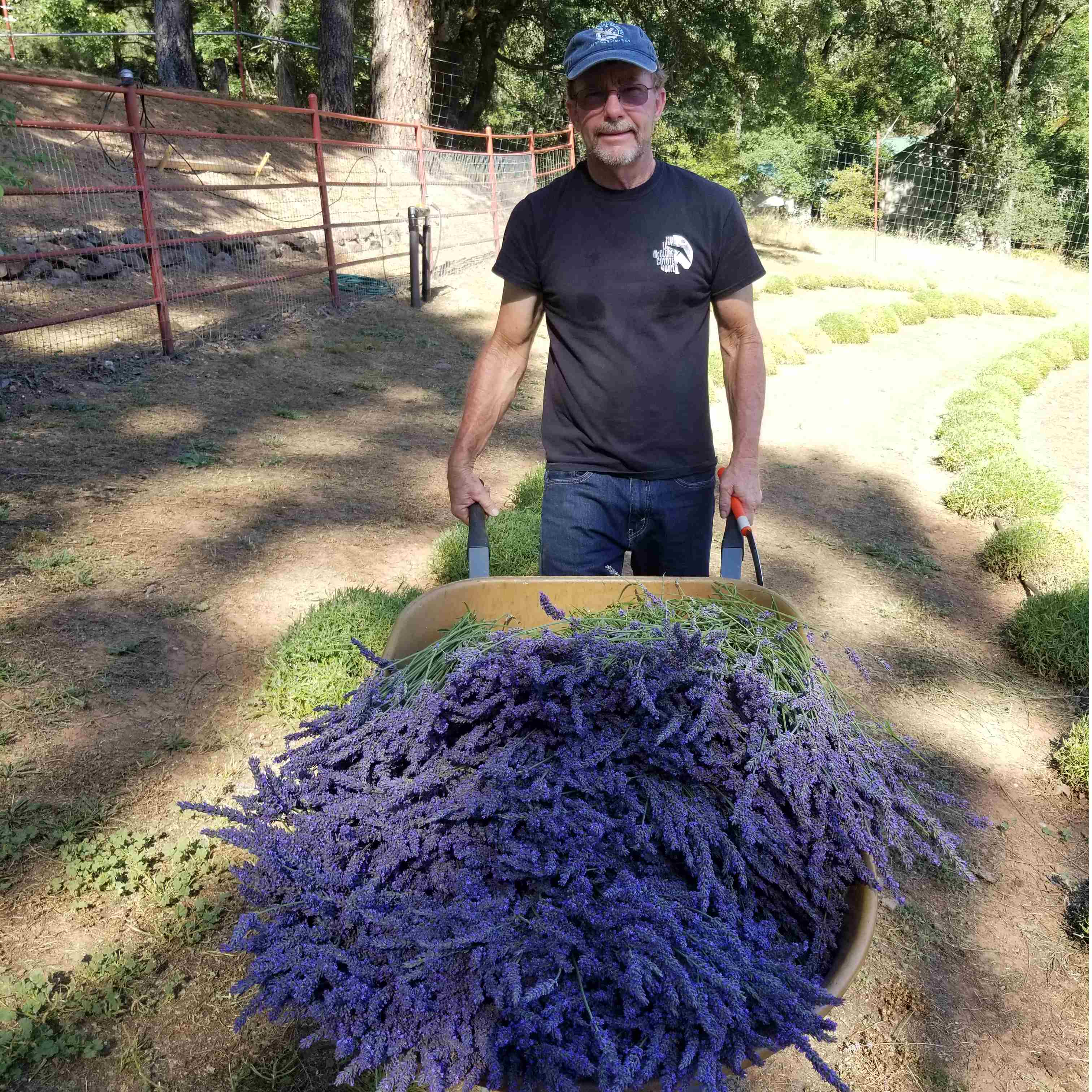Gypsy Hill Lavender Farm