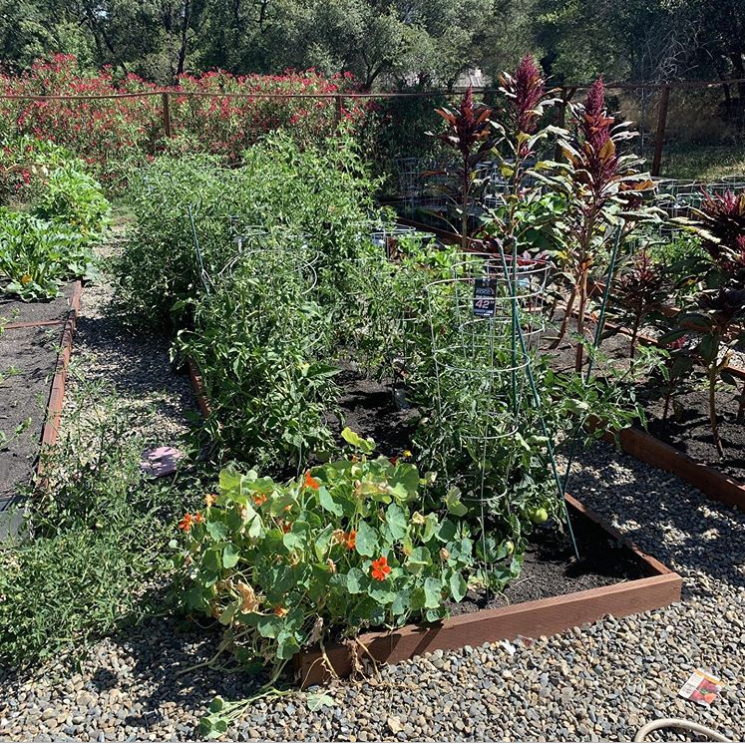 New Willow Farm
