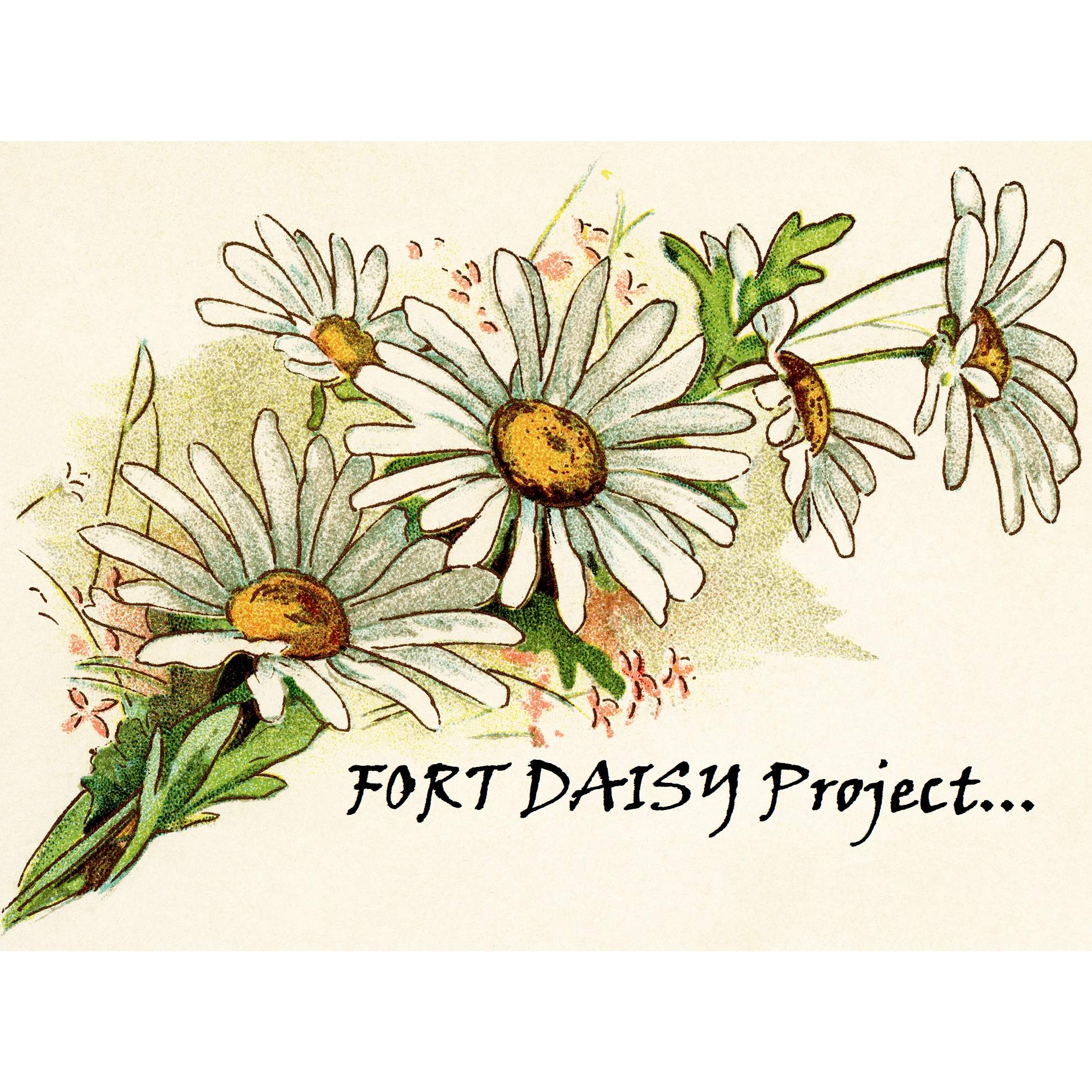 Fort Daisy Project